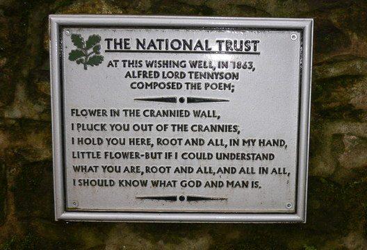"Tennyson's Poem, ""Posies in a Crannied Wall"""