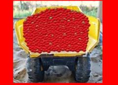 A Dump Truck Full Of Strawberries